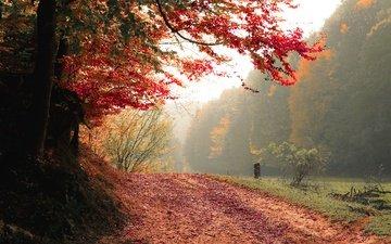 дорога, деревья, природа, лес, туман, осень
