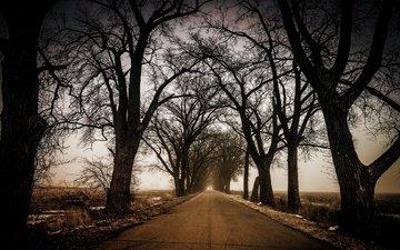 дорога, деревья, природа