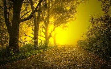дорога, деревья, туман, брусчатка