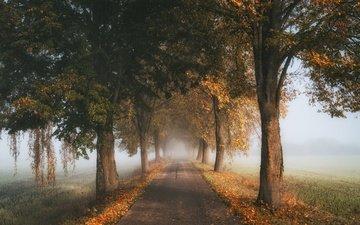 дорога, деревья, туман, осень