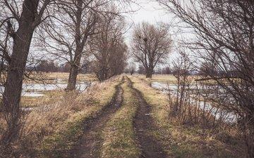 дорога, деревья, туман
