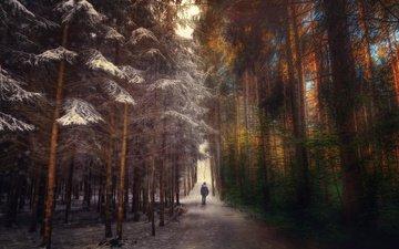 дорога, лес, человек