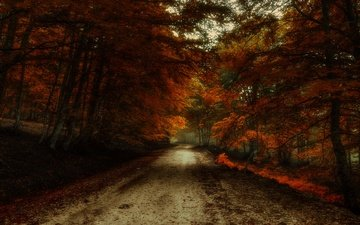 дорога, лес, листва, осень, краски осени, багрянец