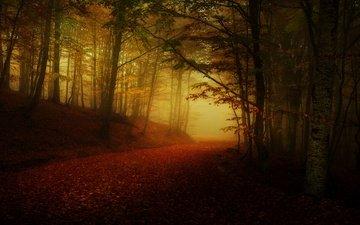 дорога, лес, туман, осень, листопад, аллея, полумрак