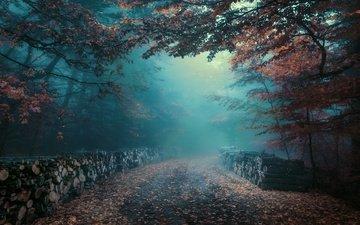 дорога, лес, утро, туман, листва, осень, дымка, бревна
