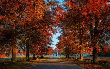 дорога, парк, листва, осень, аллея