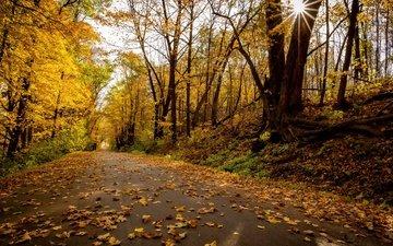 дорога, парк, осень