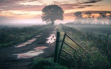 дорога, природа, туман