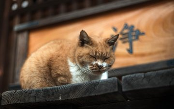 фон, кот, мордочка, кошка, сон, дом, рыжий