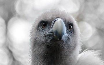 фон, птица