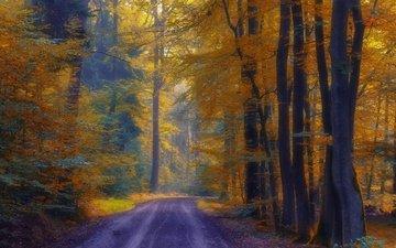 дорога, деревья, лес, осень
