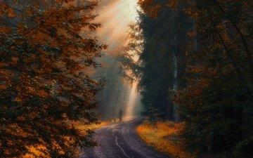 лес, осень