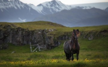 лошадь, горы, конь, исландия
