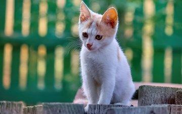 морда, поза, кошка, взгляд, забор, котенок, доски, сидит, боке, желтые глаза