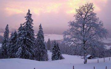 небо, облака, вечер, холмы, снег, дерево, лес, зима, туман, вид, иней, забор, дом, даль, ели, в снегу