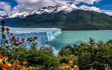 озеро, горы, кусты, ледник, аргентина, анды, патагония, los glaciares national park
