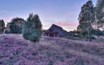 поле, лето, дом