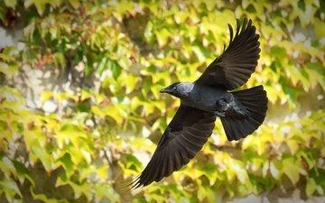 полет, птица