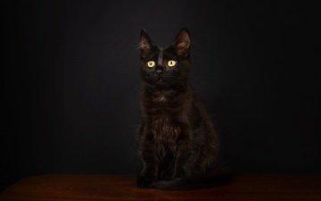 поза, мордочка, взгляд, котенок, черный, сидит, темный фон, фотостудия