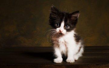 поза, мордочка, взгляд, котенок, сидит, темный фон, чёрно-белый, фотостудия