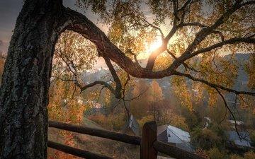 природа, дерево, пейзаж, ветки, город, осень, дома, ограждение