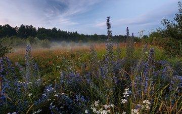 природа, лес, пейзаж, утро, туман, луг, травы