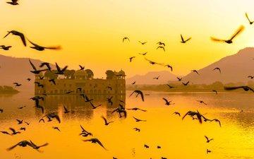 птицы, индия