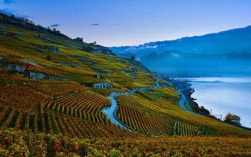 склон, швейцария, виноградник, женевское озеро