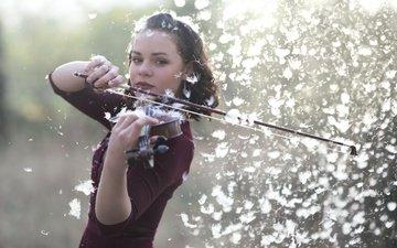 скрипка, музыка