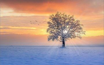 снег, дерево, закат, зима, лучи, птицы