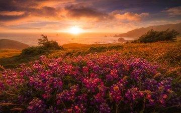 свет, цветы, облака, горы, солнце, берег, закат, море, туман, пляж, кусты, рассвет, лето, водоем, луг, розовые, дымка, люпины