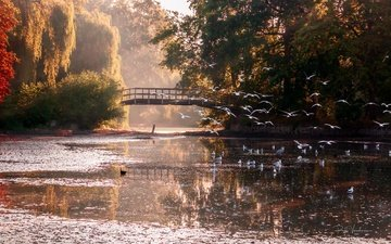 свет, деревья, берег, мостик, отражение, мост, осень, водоем, птицы, чайки, стая