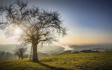 свет, дерево, утро