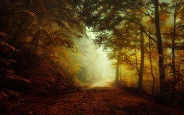 свет, дорога, лес, утро, туман, осень