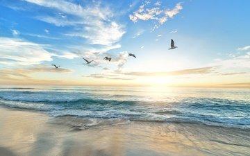 свет, облака, солнце, берег, волны, лучи, море, утро, полет, песок, пляж, рассвет, лето, побережье, птицы, чайки