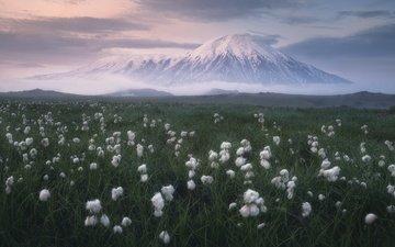 трава, облака, природа, пейзаж, камчатка, луг, вулкан, пушица