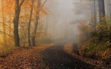 туман, осень