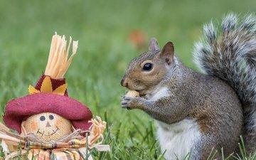 взгляд, игрушка, кукла, чучело, белка, шляпка, орех, трапеза