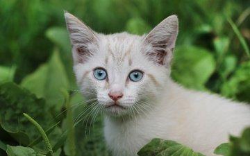 взгляд, котенок
