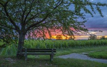 закат, скамья, виноградник