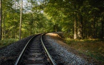 железная дорога, природа, лес