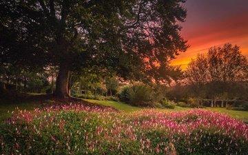 цветы, деревья, природа, закат, пейзаж, сад
