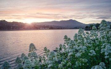 цветы, горы, солнце, берег, утро, кусты, водоем, даль, поселение
