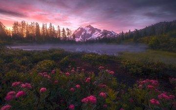 цветы, природа, закат