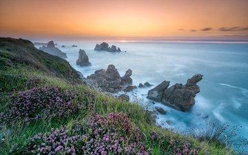 цветы, скалы, берег, море