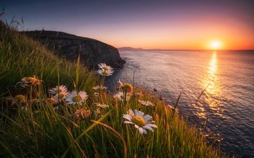 цветы, трава, закат, море, скала, побережье, ромашки, испания, бискайский залив, бискайя, bay of biscay, страна басков