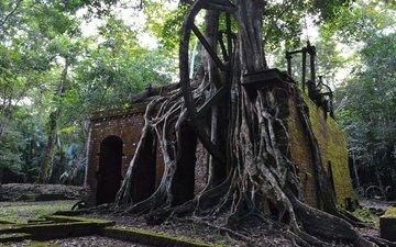 деревья, руины, архитектура, корни