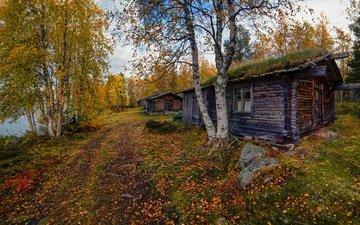 дорога, деревья, берег, лес, березы, листва, осень, водоем, дом, домик, окно, листопад