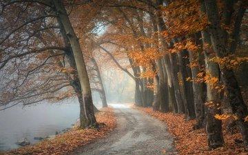 дорога, деревья, озеро, берег, лес, парк, туман, дорожка, ветки, стволы, листва, осень, пруд, дымка