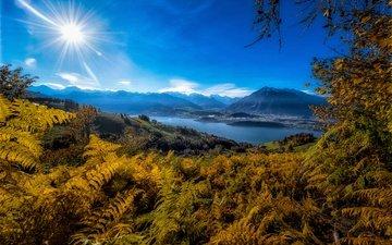 горы, берег, водоем, синева, папоротник
